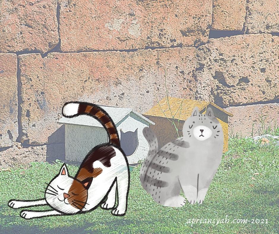 Ilustrasi Steril Kucing